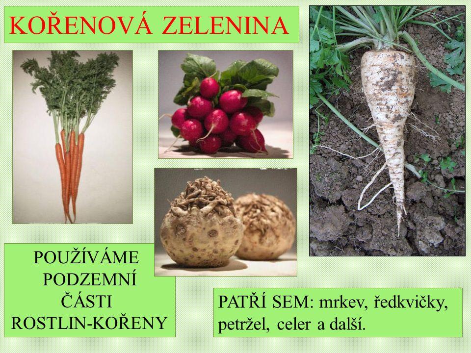 KOŘENOVÁ ZELENINA PATŘÍ SEM: mrkev, ředkvičky, petržel, celer a další.