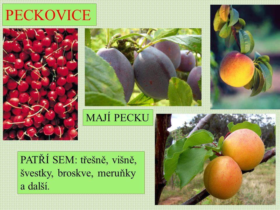 PECKOVICE PATŘÍ SEM: třešně, višně, švestky, broskve, meruňky a další. MAJÍ PECKU