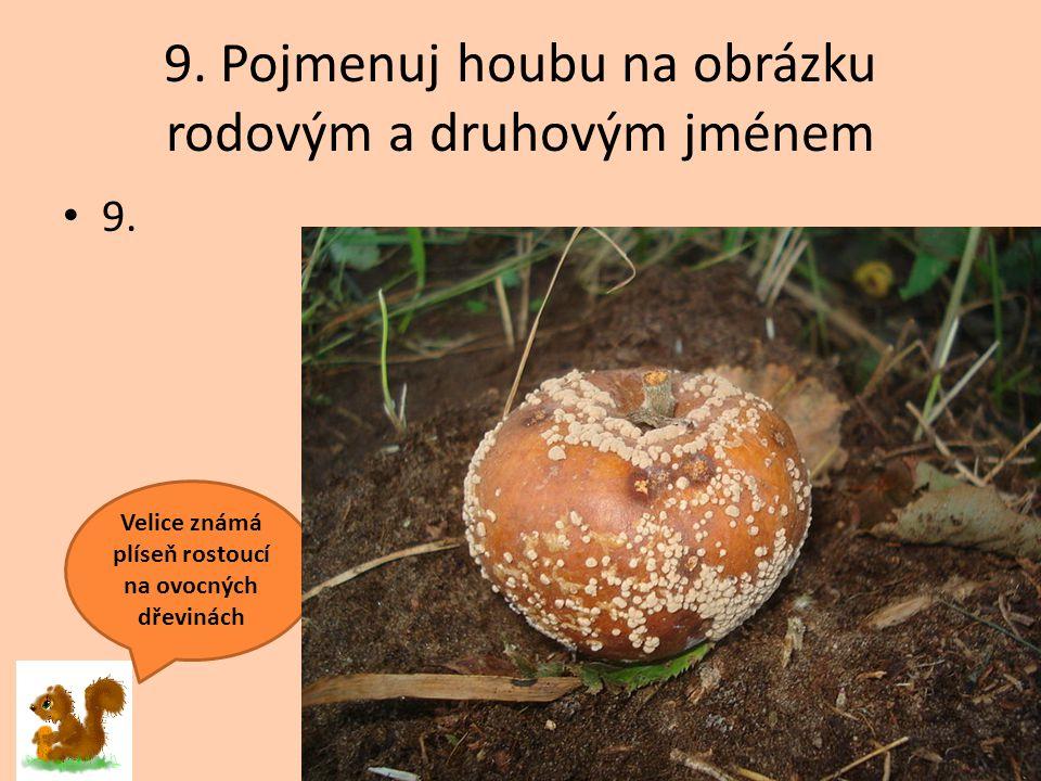 9. Pojmenuj houbu na obrázku rodovým a druhovým jménem 9. Velice známá plíseň rostoucí na ovocných dřevinách