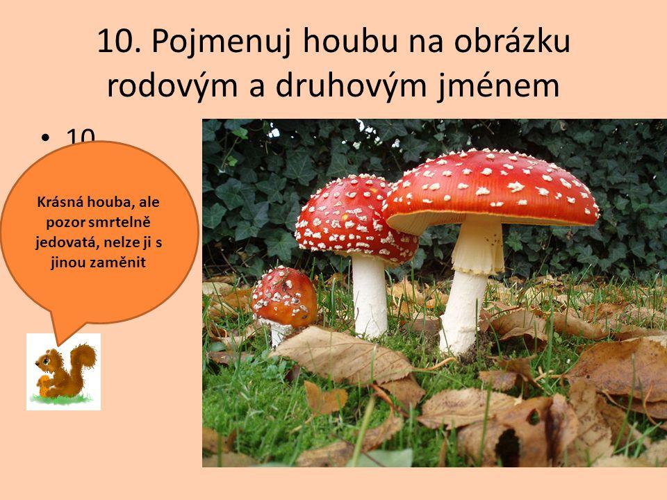 10. Pojmenuj houbu na obrázku rodovým a druhovým jménem 10. Krásná houba, ale pozor smrtelně jedovatá, nelze ji s jinou zaměnit