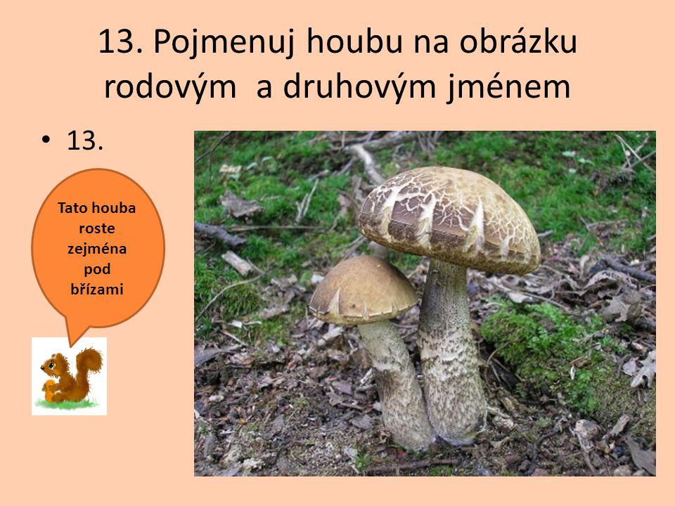 13. Pojmenuj houbu na obrázku rodovým a druhovým jménem 13. Tato houba roste zejména pod břízami