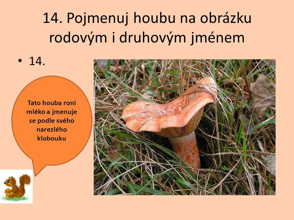 14. Pojmenuj houbu na obrázku rodovým i druhovým jménem 14. Tato houba roní mléko a jmenuje se podle svého narezlého klobouku