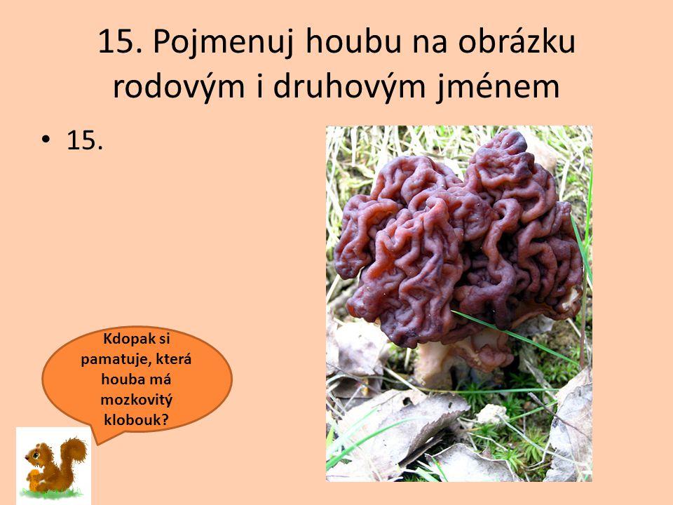 15. Pojmenuj houbu na obrázku rodovým i druhovým jménem 15. Kdopak si pamatuje, která houba má mozkovitý klobouk?