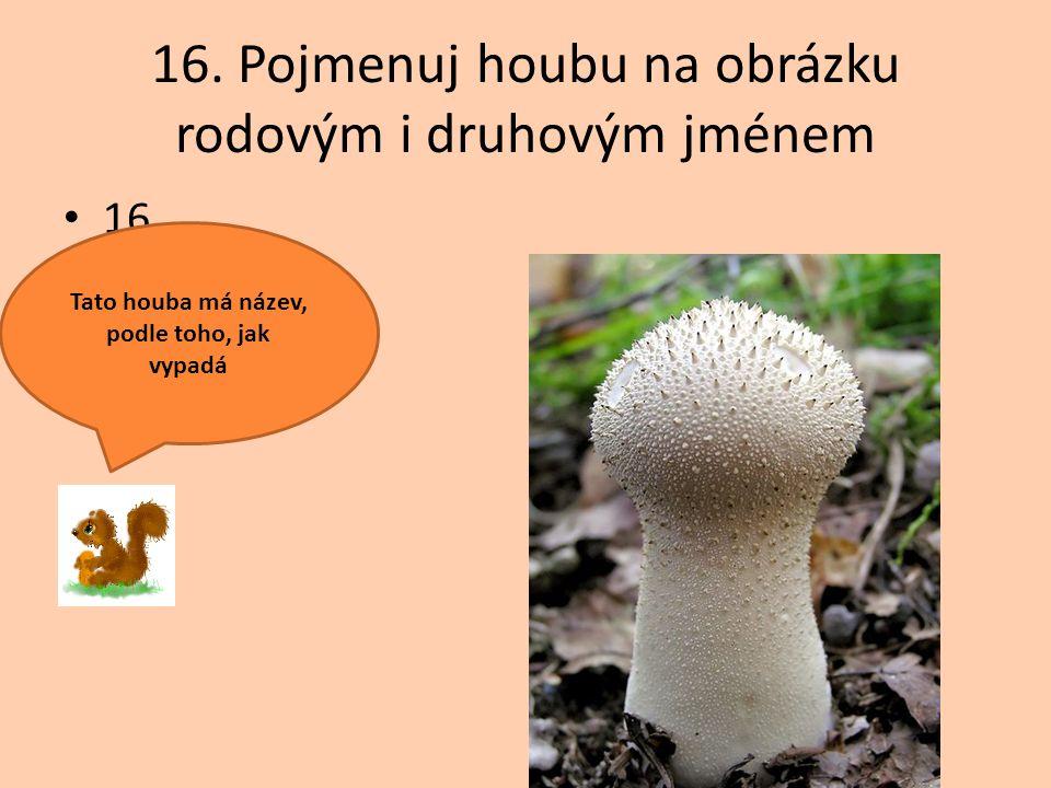 16. Pojmenuj houbu na obrázku rodovým i druhovým jménem 16. Tato houba má název, podle toho, jak vypadá