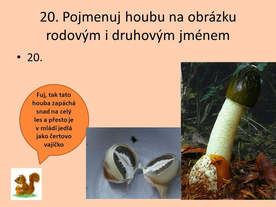 20. Pojmenuj houbu na obrázku rodovým i druhovým jménem 20. Fuj, tak tato houba zapáchá snad na celý les a přesto je v mládí jedlá jako čertovo vajíčk
