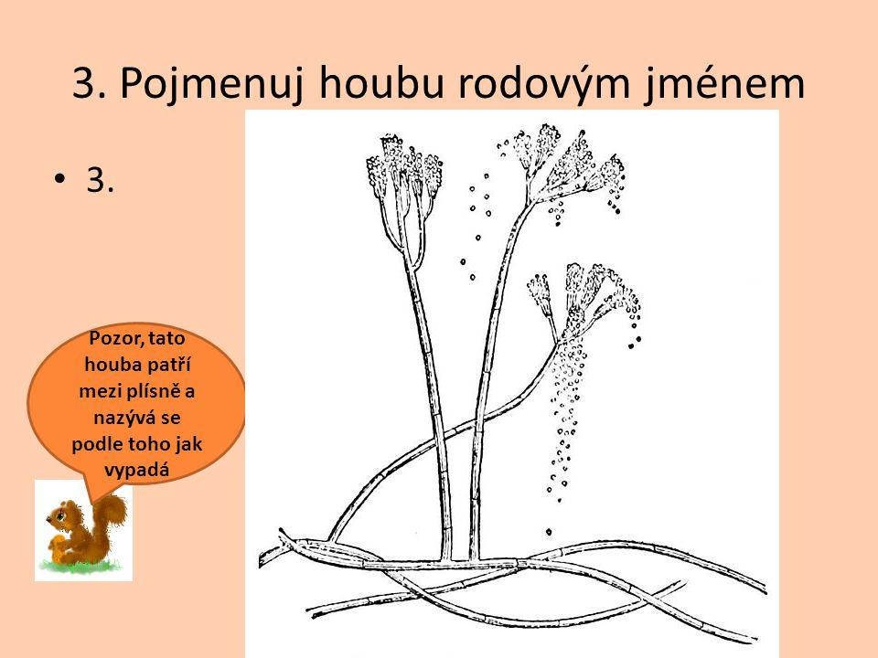 3. Pojmenuj houbu rodovým jménem 3. Pozor, tato houba patří mezi plísně a nazývá se podle toho jak vypadá