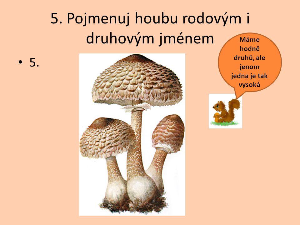 5. Pojmenuj houbu rodovým i druhovým jménem 5. Máme hodně druhů, ale jenom jedna je tak vysoká