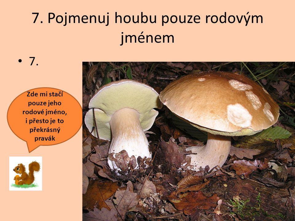 7. Pojmenuj houbu pouze rodovým jménem 7. Zde mi stačí pouze jeho rodové jméno, i přesto je to překrásný pravák