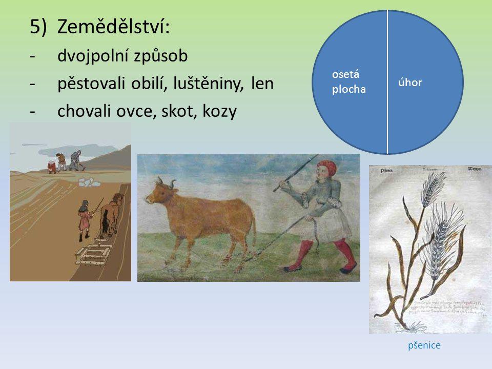 5)Zemědělství: -dvojpolní způsob -pěstovali obilí, luštěniny, len -chovali ovce, skot, kozy osetá plocha úhor pšenice