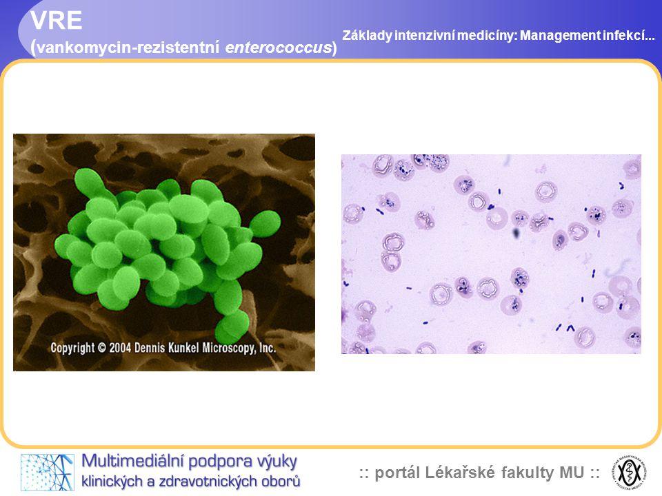 :: portál Lékařské fakulty MU :: VRE ( vankomycin-rezistentní enterococcus) Základy intenzivní medicíny: Management infekcí...
