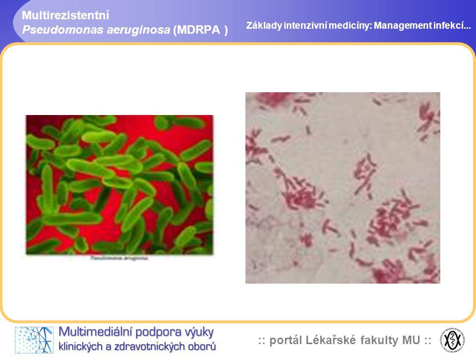 :: portál Lékařské fakulty MU :: Multirezistentní Pseudomonas aeruginosa (MDRPA ) Základy intenzivní medicíny: Management infekcí...