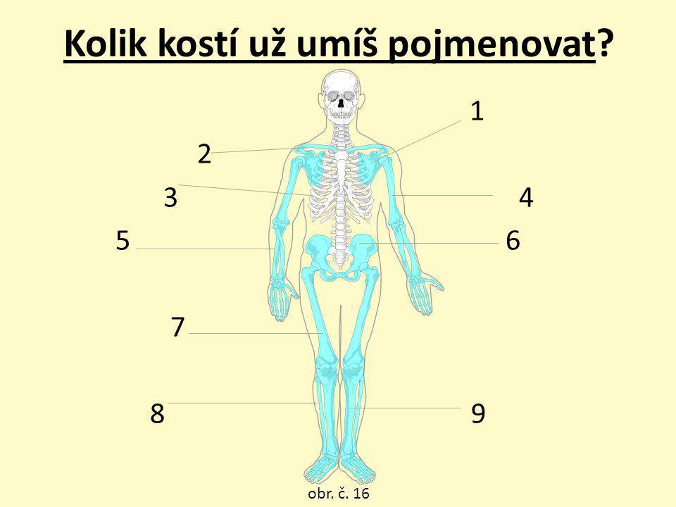 Kolik kostí už umíš pojmenovat? 1 2 3 4 5 6 7 8 9 obr. č. 16