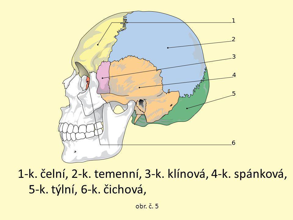 obr. č. 5 1-k. čelní, 2-k. temenní, 3-k. klínová, 4-k. spánková, 5-k. týlní, 6-k. čichová,