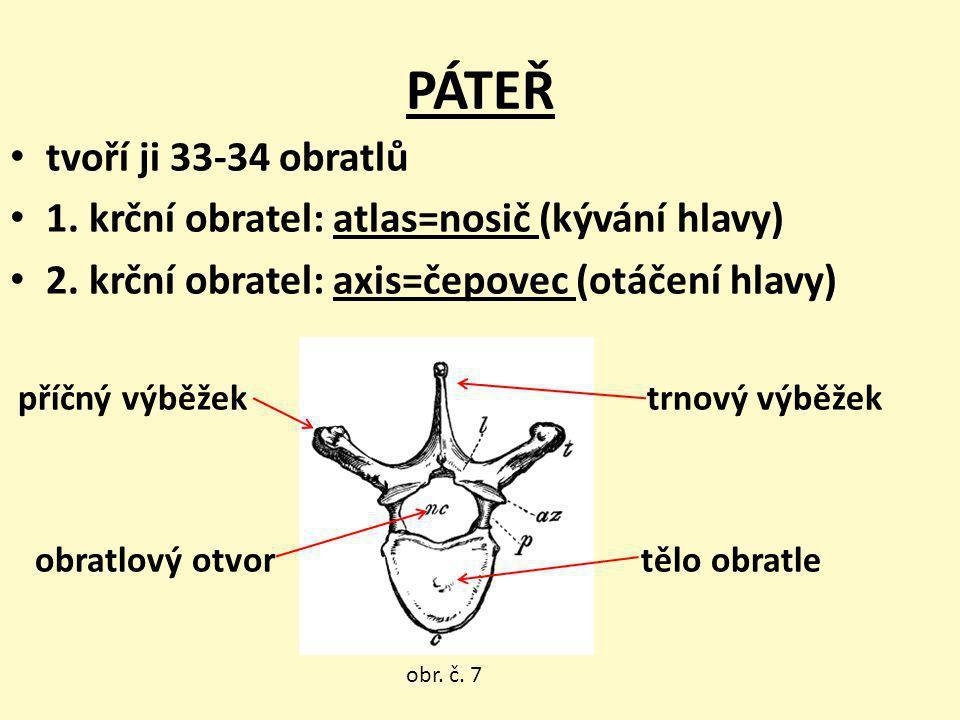 PÁTEŘ tvoří ji 33-34 obratlů 1. krční obratel: atlas=nosič (kývání hlavy) 2. krční obratel: axis=čepovec (otáčení hlavy) příčný výběžek trnový výběžek