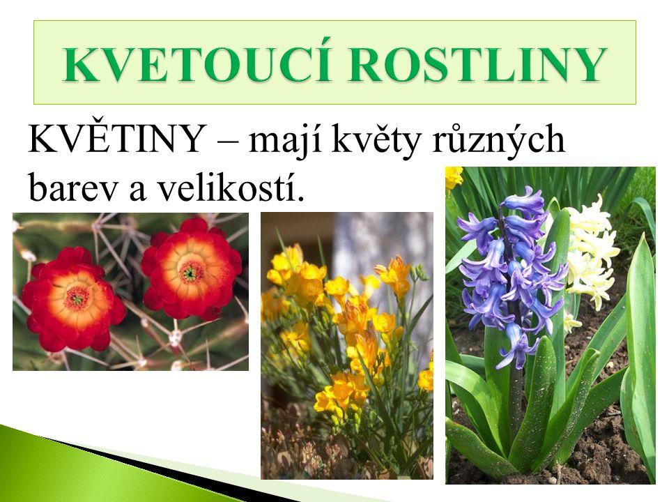 KVĚTINY – mají květy různých barev a velikostí.