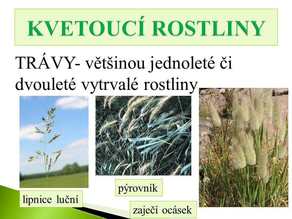 TRÁVY- většinou jednoleté či dvouleté vytrvalé rostliny lipnice luční pýrovník zaječí ocásek