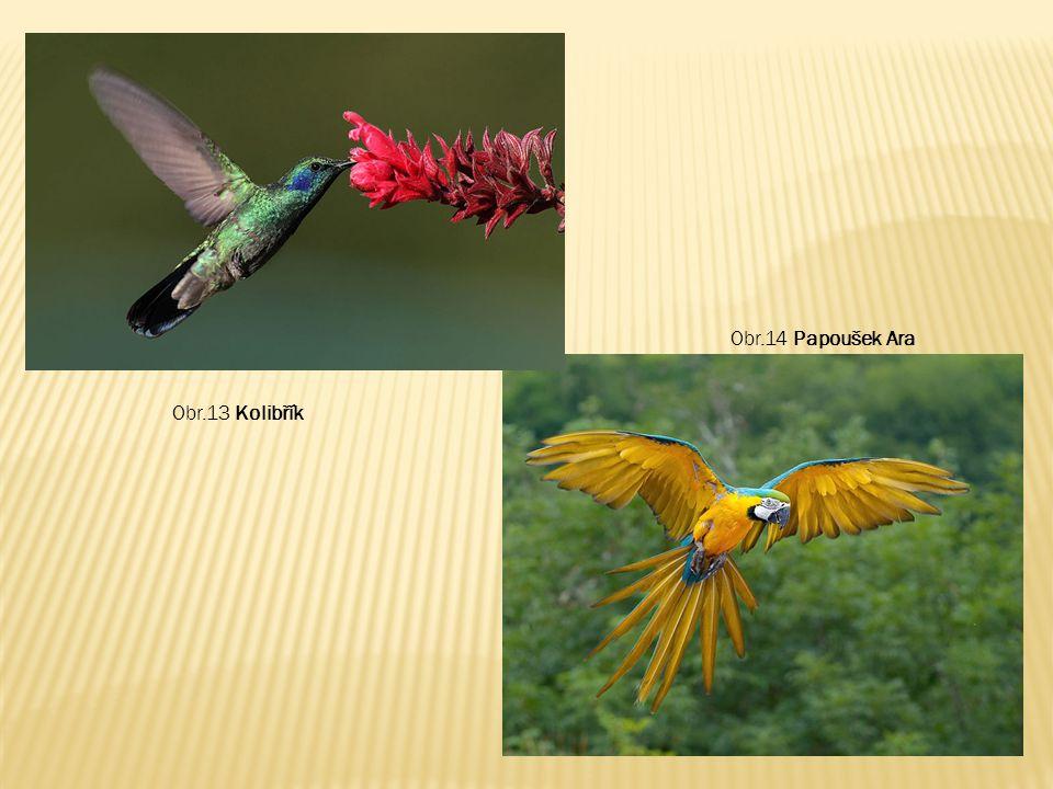 Obr.13 Kolibřík Obr.14 Papoušek Ara