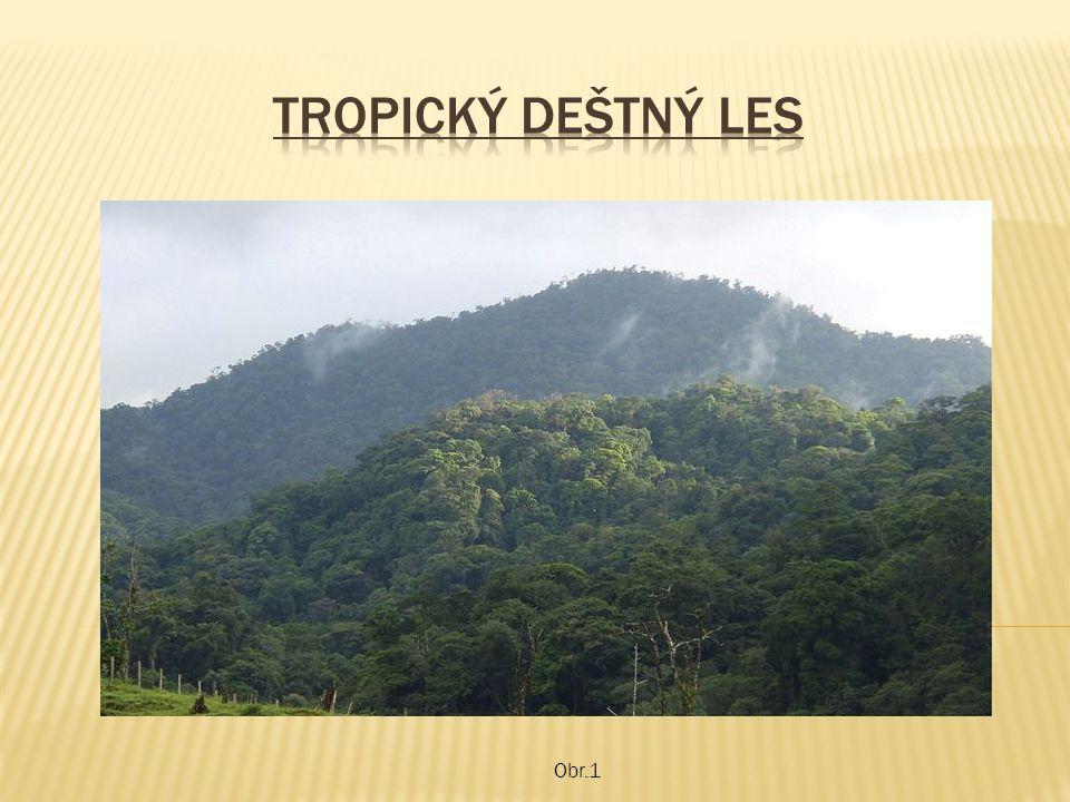 Obr.17 Zkus se doma zamyslet nad kácením tropických deštných lesů.