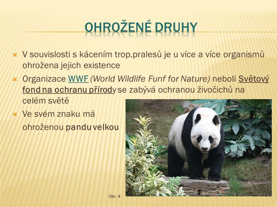 V souvislosti s kácením trop.pralesů je u více a více organismů ohrožena jejich existence  Organizace WWF (World Wildlife Funf for Nature) neboli S