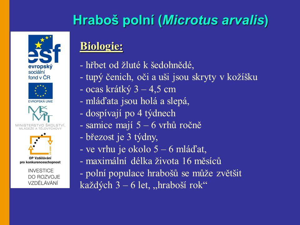 """Hraboš polní (Microtus arvalis) Biologie: - hřbet od žluté k šedohnědé, - tupý čenich, oči a uši jsou skryty v kožíšku - ocas krátký 3 – 4,5 cm - mláďata jsou holá a slepá, - dospívají po 4 týdnech - samice mají 5 – 6 vrhů ročně - březost je 3 týdny, - ve vrhu je okolo 5 – 6 mláďat, - maximální délka života 16 měsíců - polní populace hrabošů se může zvětšit každých 3 – 6 let, """"hraboší rok"""
