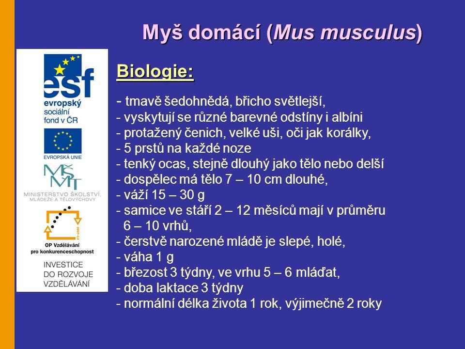 Myš domácí (Mus musculus) Biologie: - tmavě šedohnědá, břicho světlejší, - vyskytují se různé barevné odstíny i albíni - protažený čenich, velké uši, oči jak korálky, - 5 prstů na každé noze - tenký ocas, stejně dlouhý jako tělo nebo delší - dospělec má tělo 7 – 10 cm dlouhé, - váží 15 – 30 g - samice ve stáří 2 – 12 měsíců mají v průměru 6 – 10 vrhů, - čerstvě narozené mládě je slepé, holé, - váha 1 g - březost 3 týdny, ve vrhu 5 – 6 mláďat, - doba laktace 3 týdny - normální délka života 1 rok, výjimečně 2 roky