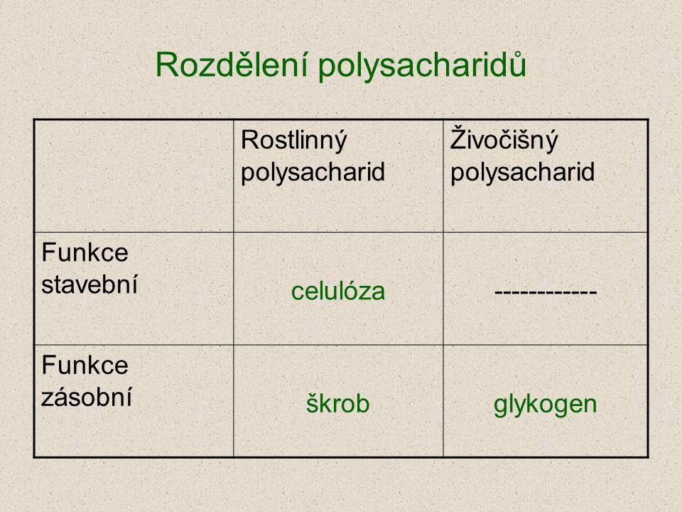 Rozdělení polysacharidů Rostlinný polysacharid Živočišný polysacharid Funkce stavební celulóza------------ Funkce zásobní škrobglykogen