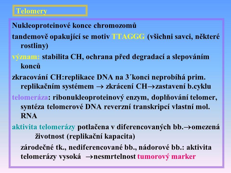Telomery Nukleoproteinové konce chromozomů tandemově opakující se motiv TTAGGG (všichni savci, některé rostliny) význam: stabilita CH, ochrana před de