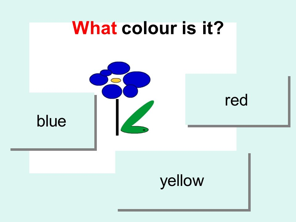 What colour is it blue red yellow