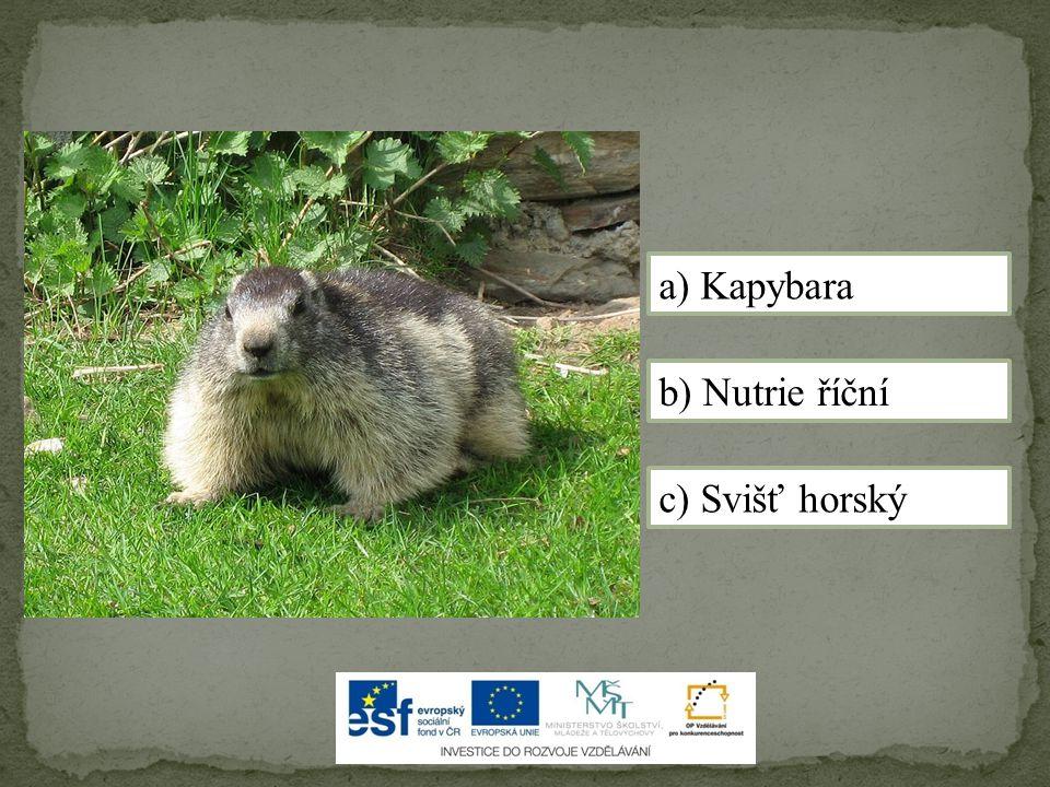 c) Svišť horský a) Kapybara b) Nutrie říční
