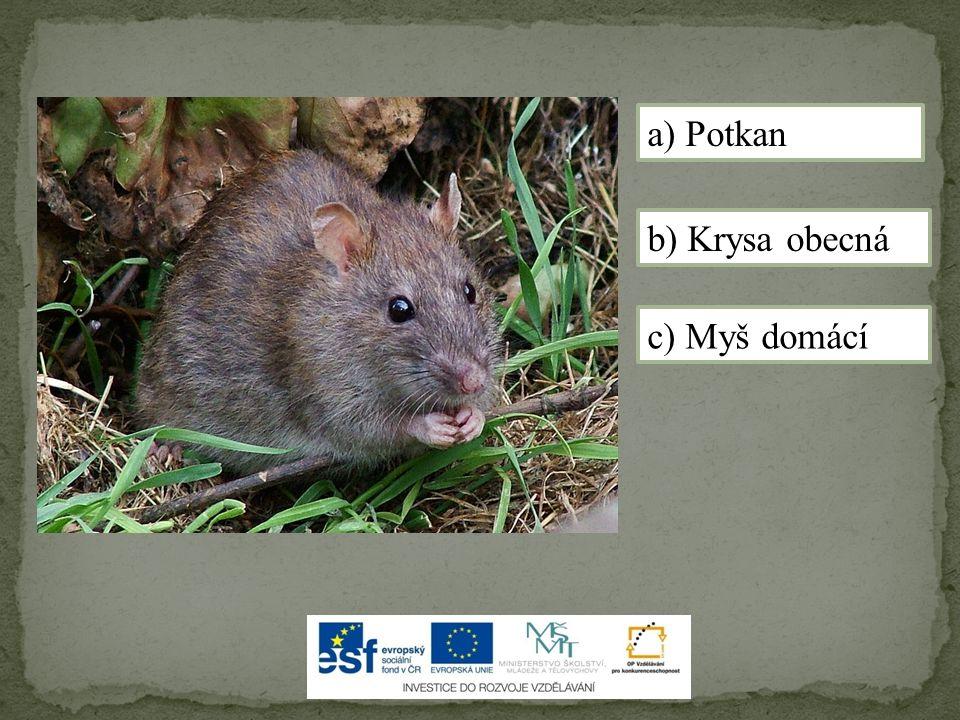 a) Potkan b) Krysa obecná c) Myš domácí