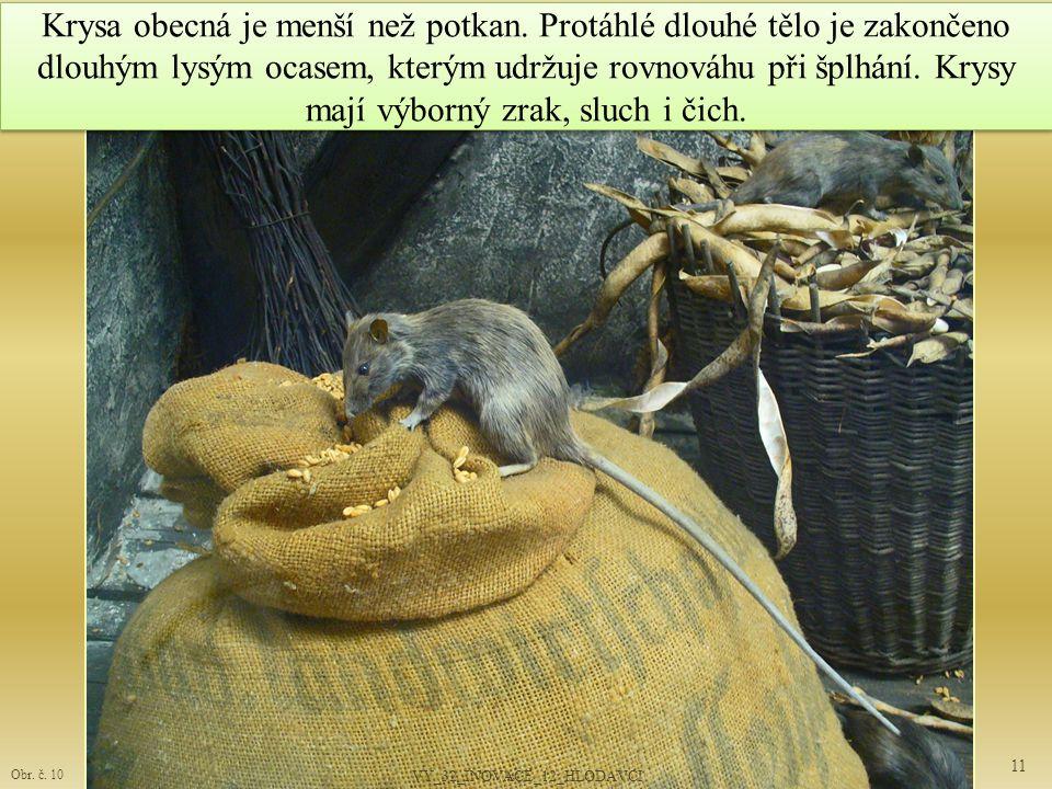 Krysa obecná je menší než potkan.