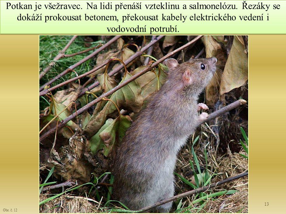 Potkan je všežravec. Na lidi přenáší vzteklinu a salmonelózu. Řezáky se dokáží prokousat betonem, překousat kabely elektrického vedení i vodovodní pot