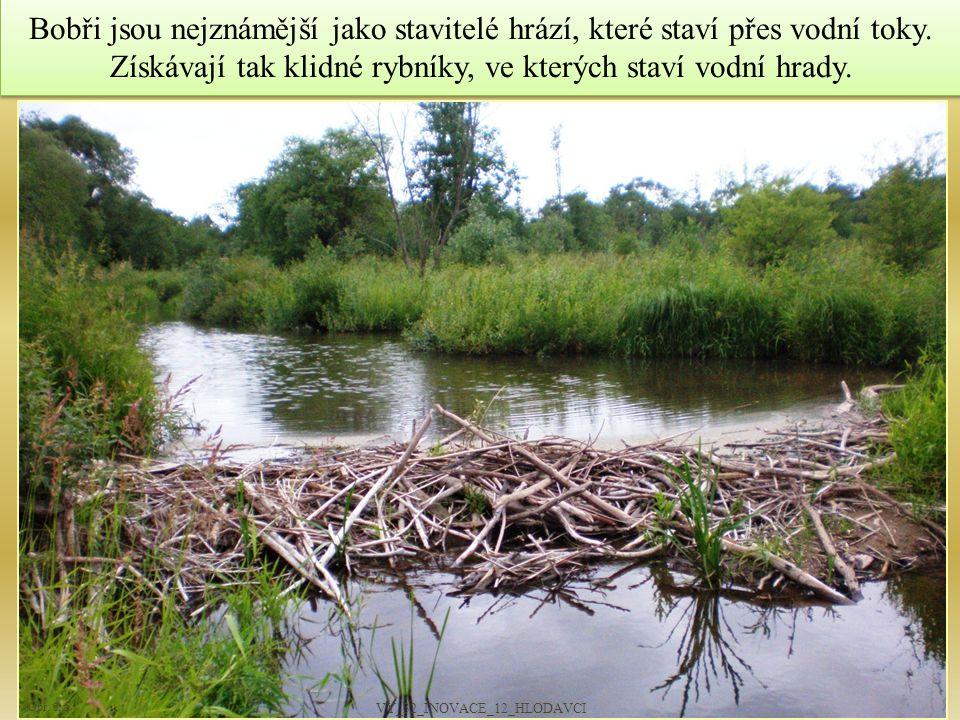 Bobři jsou nejznámější jako stavitelé hrází, které staví přes vodní toky. Získávají tak klidné rybníky, ve kterých staví vodní hrady. 6 Obr. č. 5 VY_3