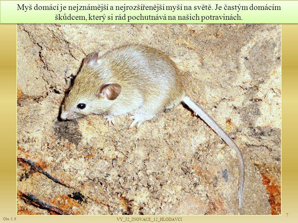 7 Obr. č. 6 Myš domácí je nejznámější a nejrozšířenější myší na světě. Je častým domácím škůdcem, který si rád pochutnává na našich potravinách. VY_32