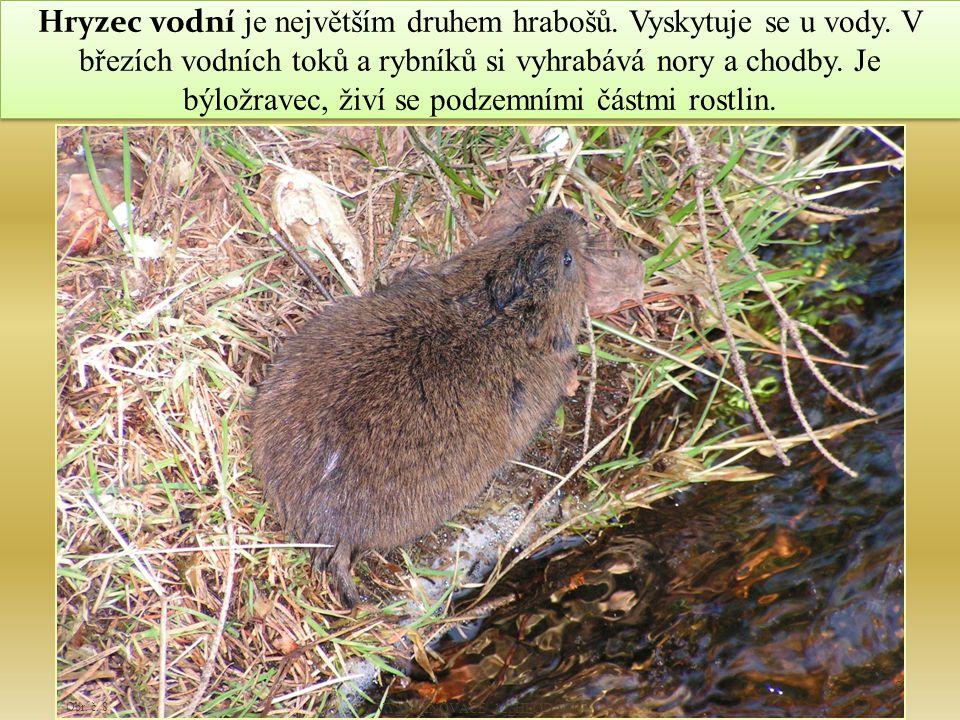 20 Snímek č.1 – Veverka obecná. DELLEX. http://de.wikipedia.org [online].