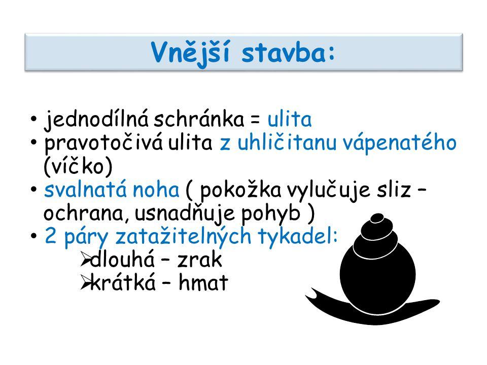 pravotočivá levotočivá Levotočivá a pravotočivá ulita: obr. 5