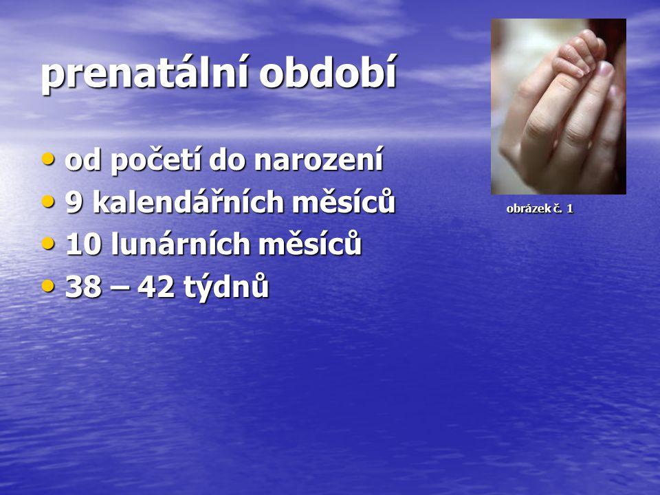 prenatální období od početí do narození od početí do narození 9 kalendářních měsíců obrázek č. 1 9 kalendářních měsíců obrázek č. 1 10 lunárních měsíc