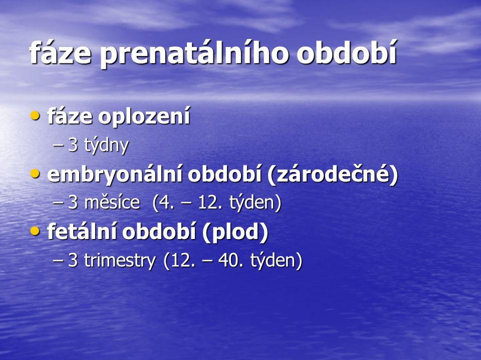 fáze prenatálního období fáze oplození fáze oplození –3 týdny embryonální období (zárodečné) embryonální období (zárodečné) –3 měsíce (4. – 12. týden)