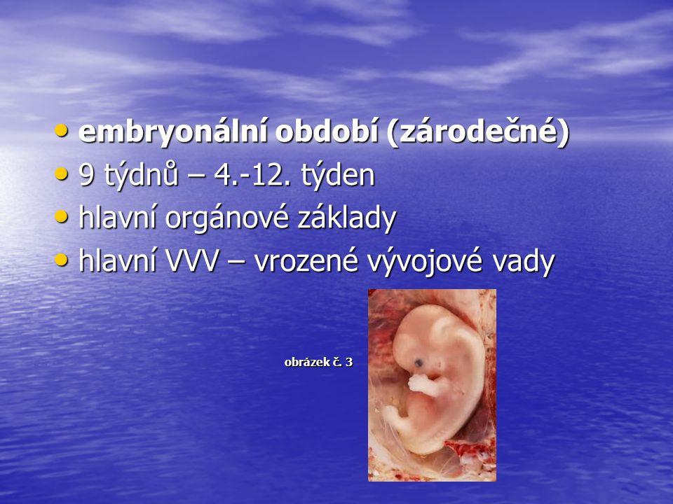 embryonální období (zárodečné) embryonální období (zárodečné) 9 týdnů – 4.-12. týden 9 týdnů – 4.-12. týden hlavní orgánové základy hlavní orgánové zá