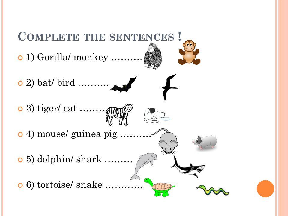 C OMPLETE THE SENTENCES ! 1) Gorilla/ monkey ………. 2) bat/ bird ………. 3) tiger/ cat ……… 4) mouse/ guinea pig ………. 5) dolphin/ shark ……… 6) tortoise/ sna