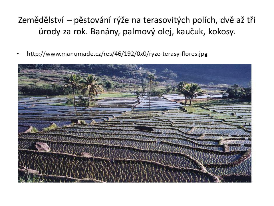 Zemědělství – pěstování rýže na terasovitých polích, dvě až tři úrody za rok. Banány, palmový olej, kaučuk, kokosy. http://www.manumade.cz/res/46/192/