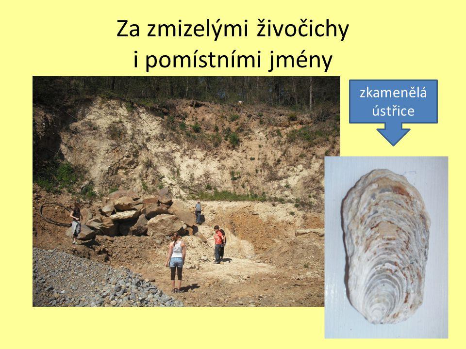 zkamenělá ústřice