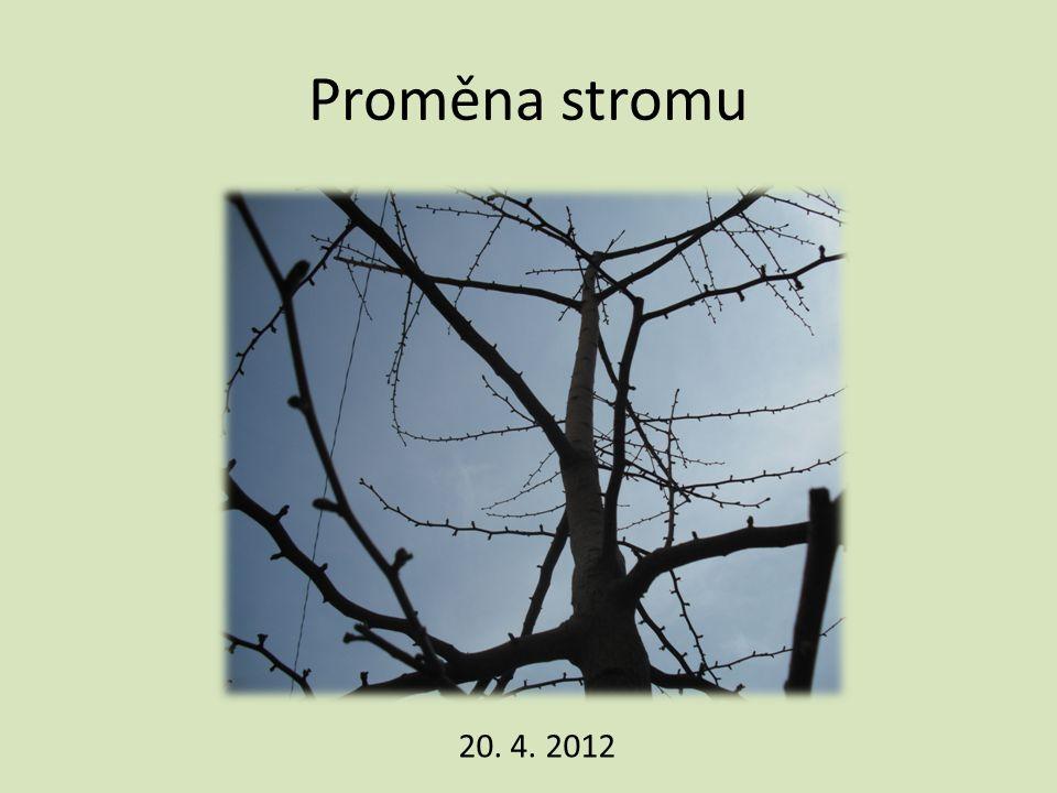 Proměna stromu 20. 4. 2012