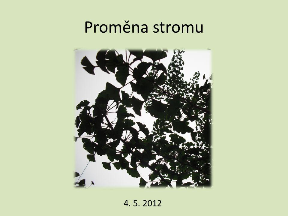 Proměna stromu 4. 5. 2012