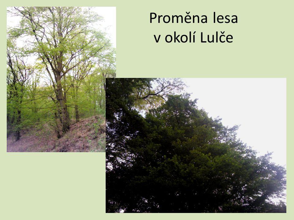 Proměna lesa v okolí Lulče