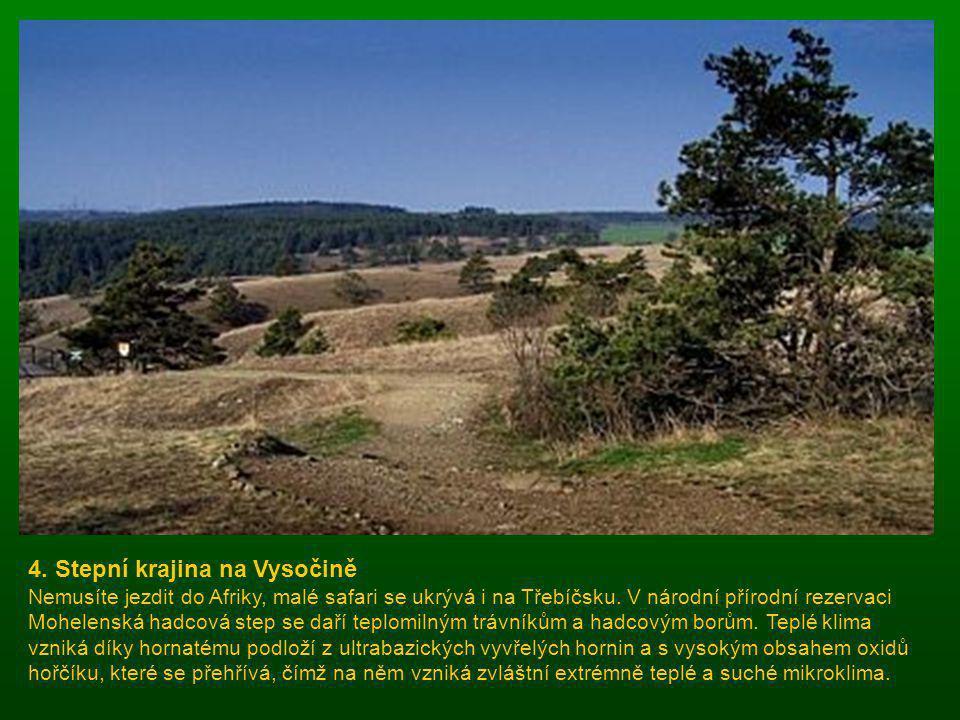 3. Prales v Beskydech Kdysi pokrýval celé Beskydy smíšený les, který se v původní podobě dochoval jen v Těšínských Beskydech. V přírodní rezervaci pra