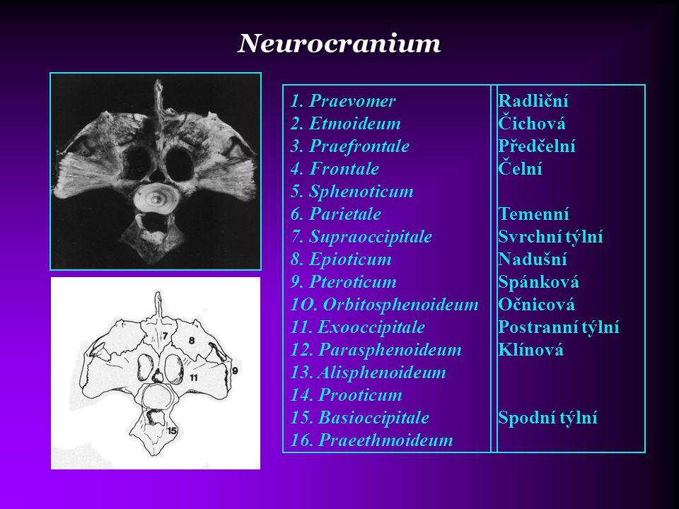 Neurocranium 1. Praevomer 2. Etmoideum 3. Praefrontale 4. Frontale 5. Sphenoticum 6. Parietale 7. Supraoccipitale 8. Epioticum 9. Pteroticum 1O. Orbit