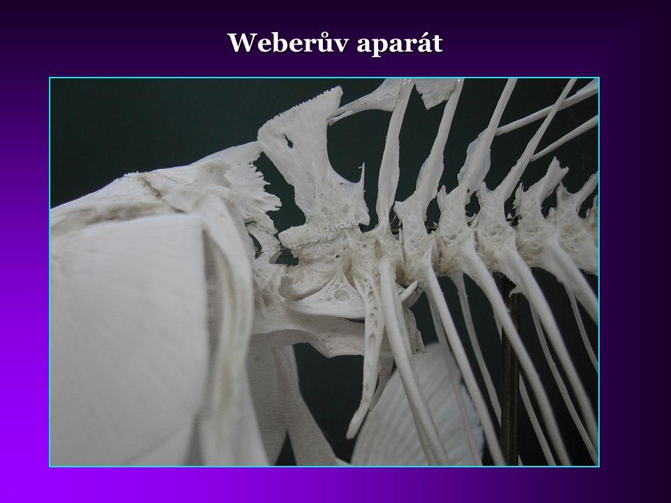 Weberův aparát