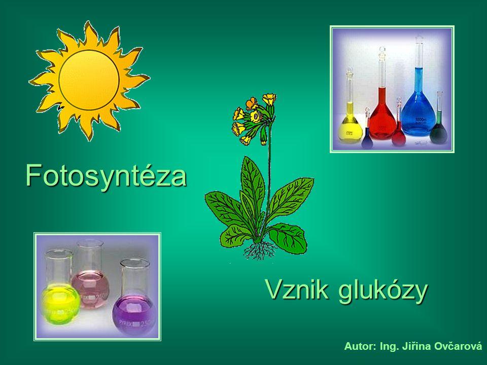 Seznam kapitol Další CC HH C O H H O C H O H C O HH C O HH O H O O H O H H O H H O H O O O O O O H O H O O H O H H O H Glukóza O O 6 atomů uhlíku 12 atomů vodíku 6 atomů kyslíku 1 molekula glukózy se skládá ze: Produkty Produkty 6 molekul kyslíku = 6 molekul kyslíku = Dále vzniká: Dále vzniká: 6 molekul vody = 6 molekul vody = Celkem tedy: 24 atomů kyslíku 24 atomů vodíku 6 atomů uhlíku 6 atomů uhlíku Sluneční energie je uložena v chemické vazbě glukózy Sluneční energie je uložena v chemické vazbě glukózy 12 atomů kyslíku 6 atomů kyslíku 12 atomů vodíku H