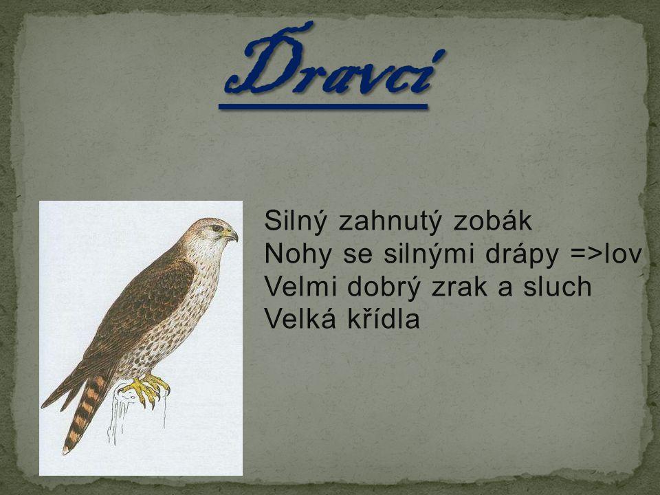Silný zahnutý zobák Nohy se silnými drápy =>lov Velmi dobrý zrak a sluch Velká křídla